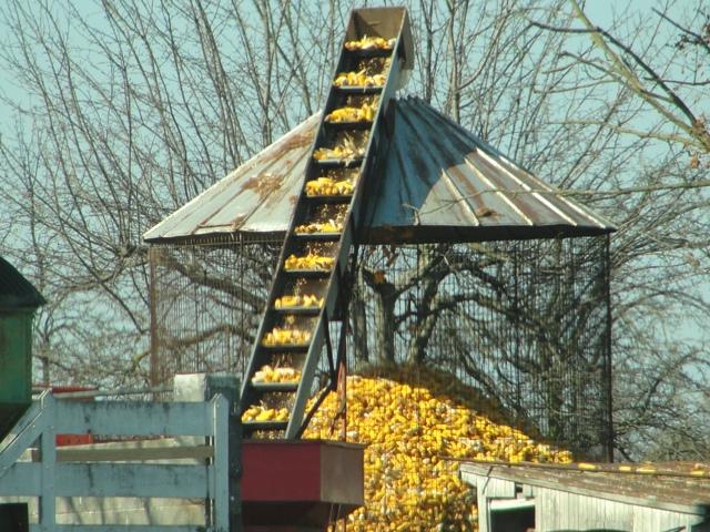 web-corn-elevator.jpg