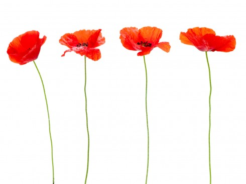 Floral design, spring flowers, poppies decoration